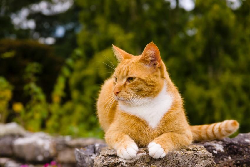 Kamień na murek ogrodowy – ozdobny kamień naturalny na ogrodzenia i murki. Jak zabrać się za aranżację z użyciem kamienia w ogrodzie?
